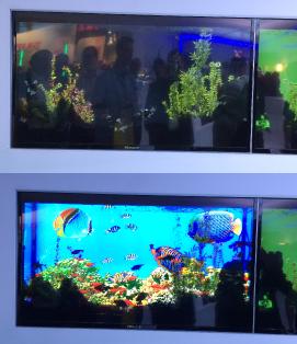 fish-tank-transparent-tv